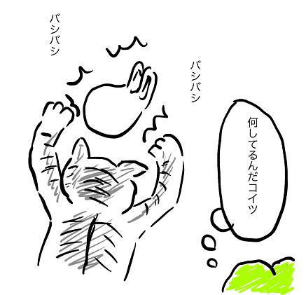 コンビニ袋と全力で戦う子猫
